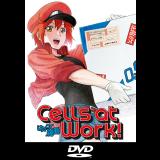 Cells at Work! Volumen 1 DVD
