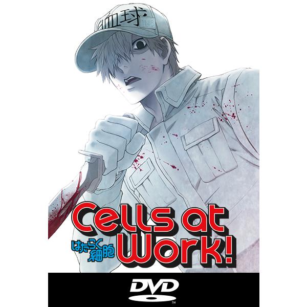 Cells at Work! Volumen 2 Blu ray